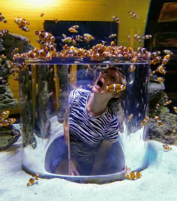 Finding Nemo.