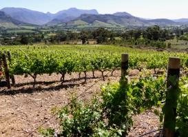 Stellenbosch winery.