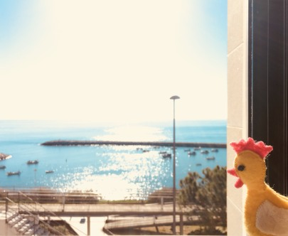 Miss Chicken checks out the view